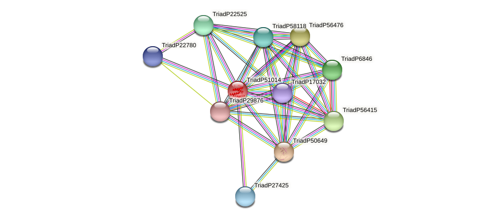 TriadP51014 protein (Trichoplax adhaerens) - STRING interaction network
