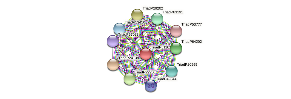TriadP51161 protein (Trichoplax adhaerens) - STRING interaction network