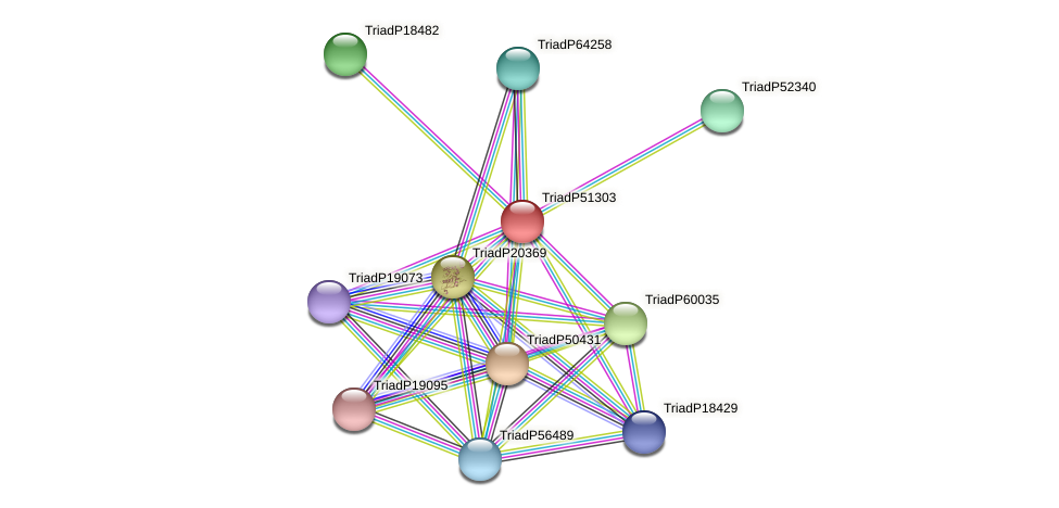 TriadP51303 protein (Trichoplax adhaerens) - STRING interaction network