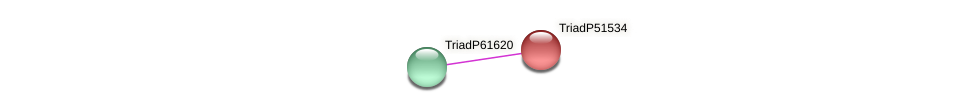 TriadP51534 protein (Trichoplax adhaerens) - STRING interaction network