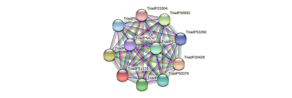 TriadP51576 protein (Trichoplax adhaerens) - STRING interaction network