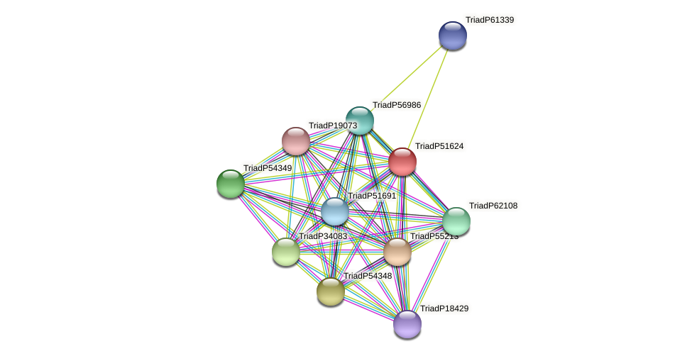 TriadP51624 protein (Trichoplax adhaerens) - STRING interaction network