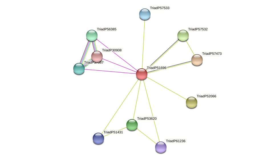 TriadP51696 protein (Trichoplax adhaerens) - STRING interaction network