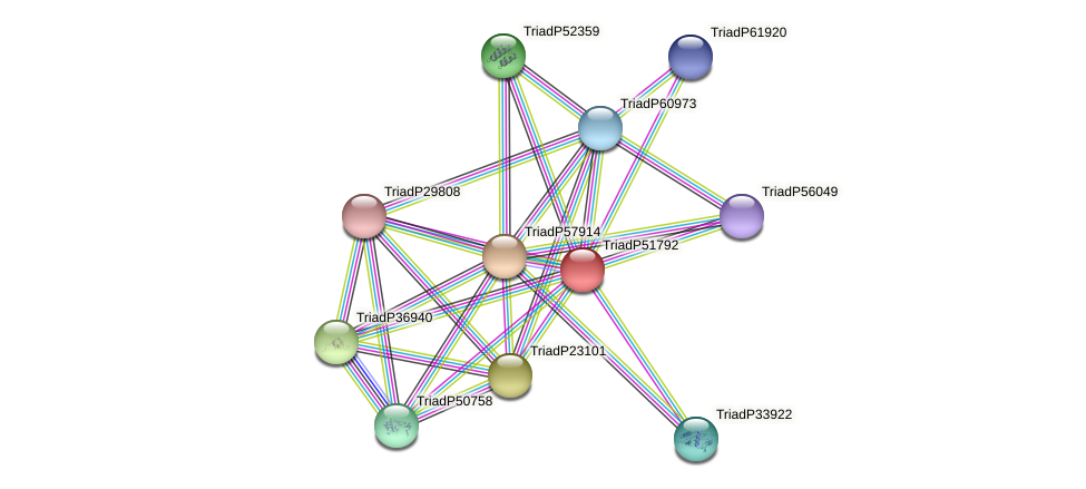 TriadP51792 protein (Trichoplax adhaerens) - STRING interaction network