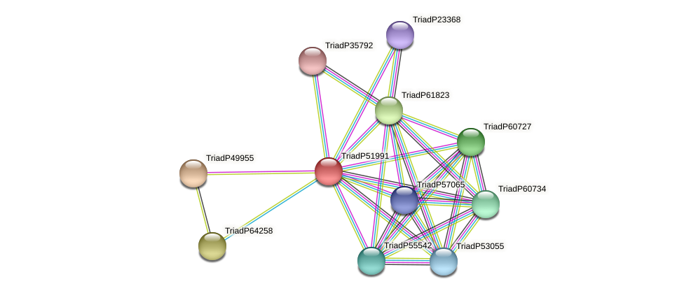 TriadP51991 protein (Trichoplax adhaerens) - STRING interaction network