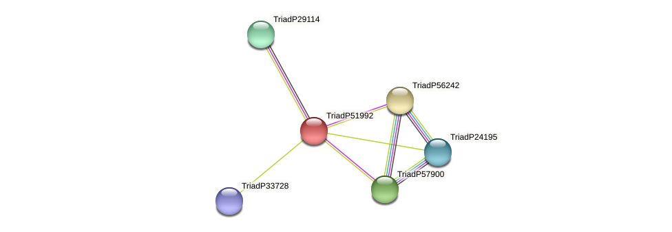 TriadP51992 protein (Trichoplax adhaerens) - STRING interaction network