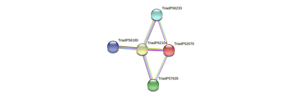TriadP52070 protein (Trichoplax adhaerens) - STRING interaction network