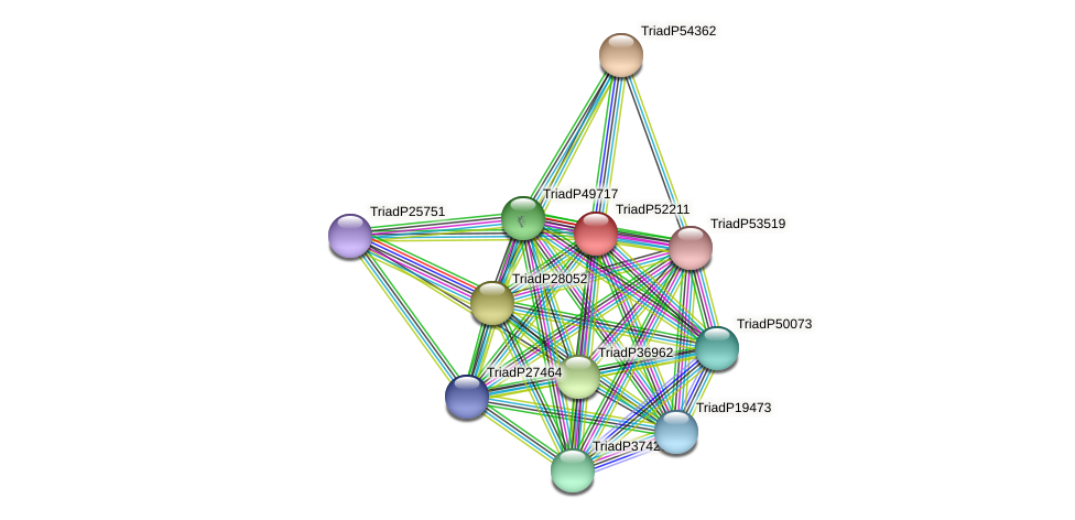 TriadP52211 protein (Trichoplax adhaerens) - STRING interaction network