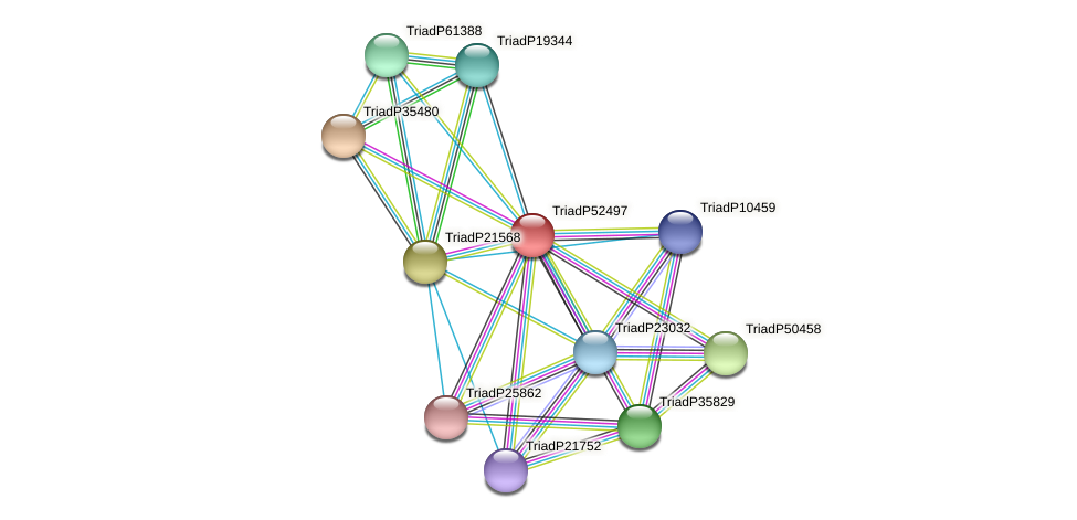 TriadP52497 protein (Trichoplax adhaerens) - STRING interaction network