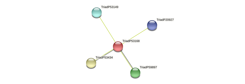 TriadP53168 protein (Trichoplax adhaerens) - STRING interaction network