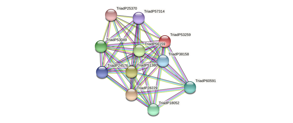 TriadP53259 protein (Trichoplax adhaerens) - STRING interaction network
