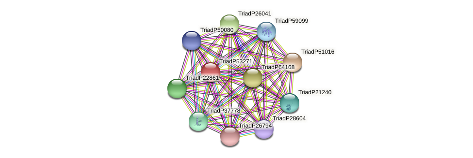 TriadP53271 protein (Trichoplax adhaerens) - STRING interaction network