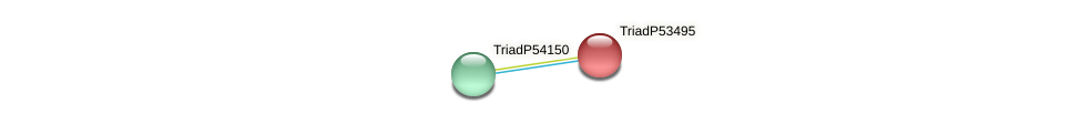 TriadP53495 protein (Trichoplax adhaerens) - STRING interaction network