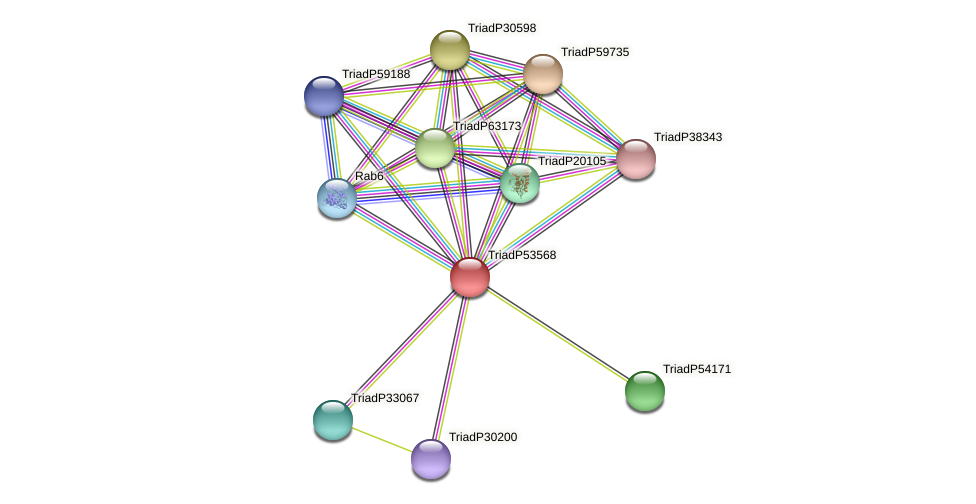 TriadP53568 protein (Trichoplax adhaerens) - STRING interaction network