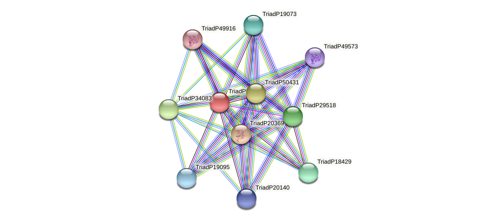 TriadP53574 protein (Trichoplax adhaerens) - STRING interaction network