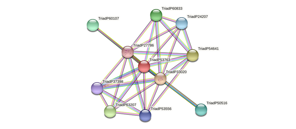 TriadP53763 protein (Trichoplax adhaerens) - STRING interaction network