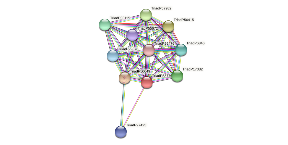 TriadP53770 protein (Trichoplax adhaerens) - STRING interaction network