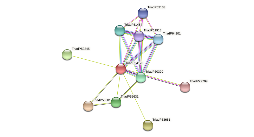 TriadP54170 protein (Trichoplax adhaerens) - STRING interaction network