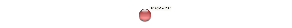 TriadP54207 protein (Trichoplax adhaerens) - STRING interaction network