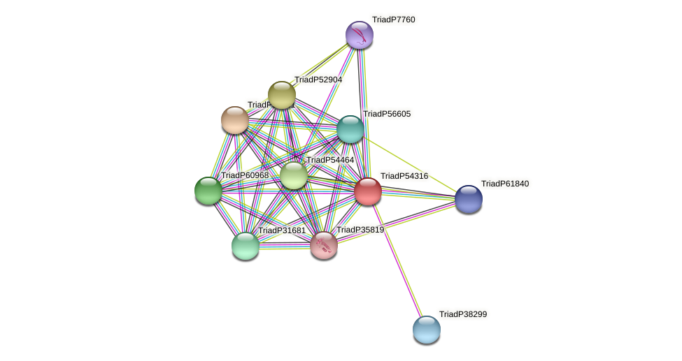 TriadP54316 protein (Trichoplax adhaerens) - STRING interaction network