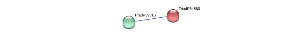 TriadP54880 protein (Trichoplax adhaerens) - STRING interaction network