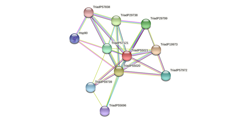 TriadP55021 protein (Trichoplax adhaerens) - STRING interaction network