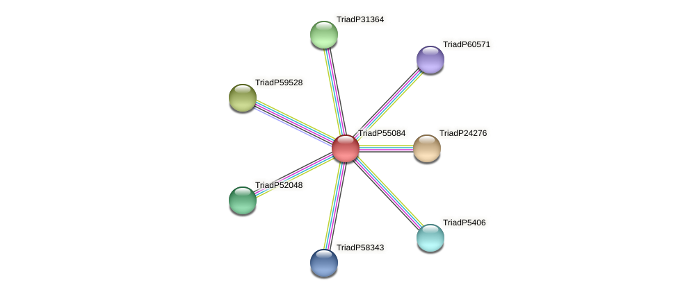 TriadP55084 protein (Trichoplax adhaerens) - STRING interaction network