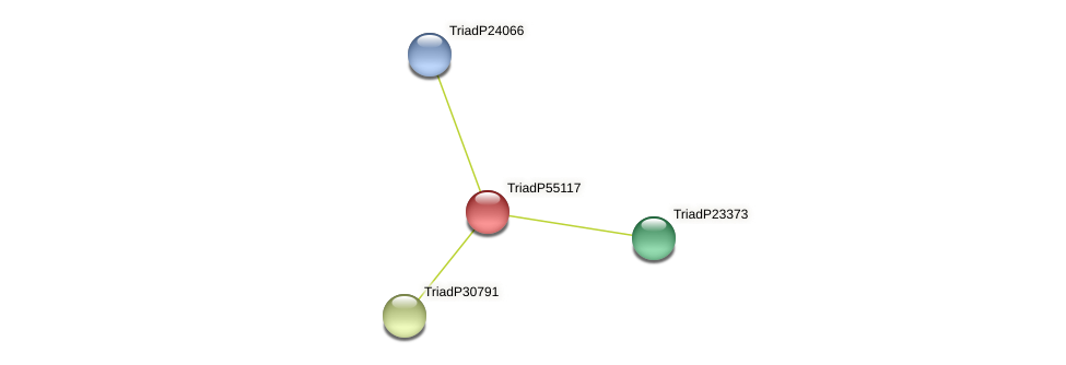 TriadP55117 protein (Trichoplax adhaerens) - STRING interaction network
