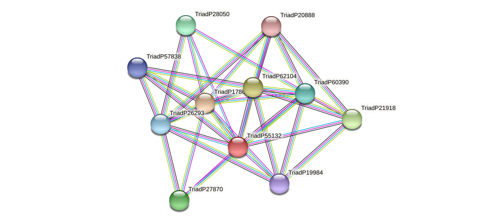 TriadP55132 protein (Trichoplax adhaerens) - STRING interaction network