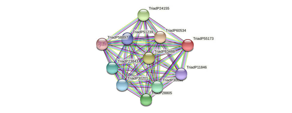 TriadP55173 protein (Trichoplax adhaerens) - STRING interaction network