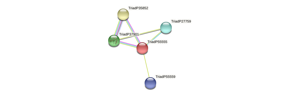 TriadP55555 protein (Trichoplax adhaerens) - STRING interaction network