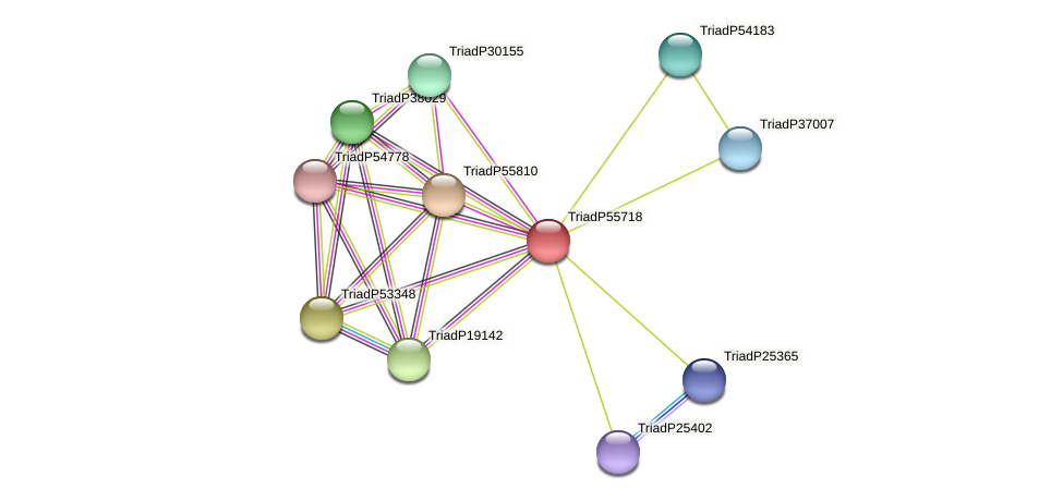 TriadP55718 protein (Trichoplax adhaerens) - STRING interaction network
