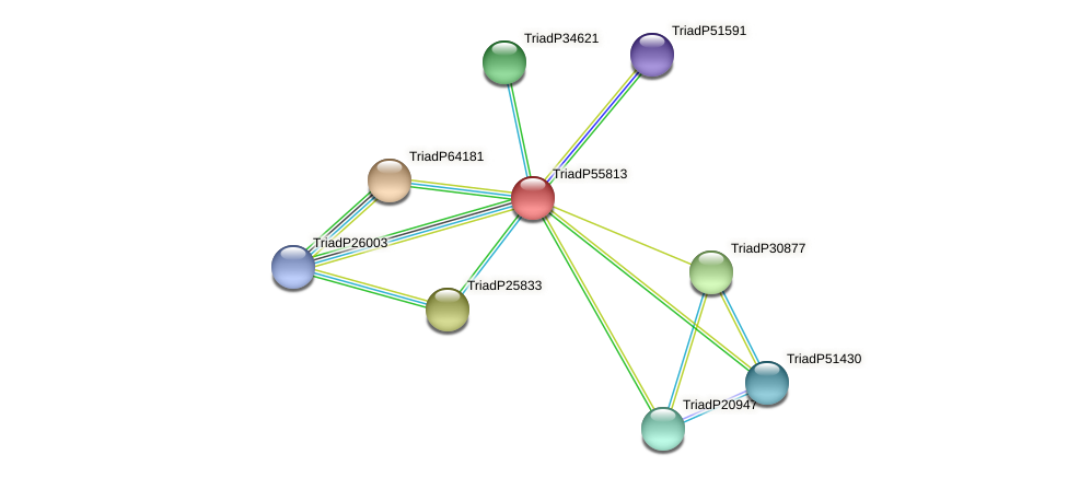 TriadP55813 protein (Trichoplax adhaerens) - STRING interaction network