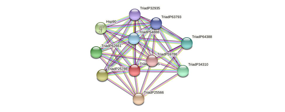 TriadP56335 protein (Trichoplax adhaerens) - STRING interaction network