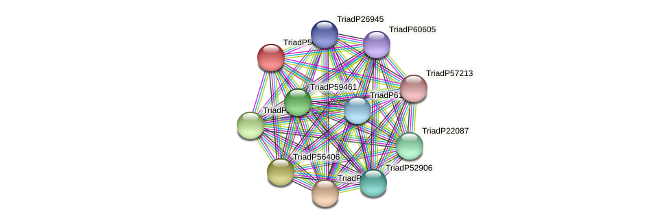 TriadP56408 protein (Trichoplax adhaerens) - STRING interaction network