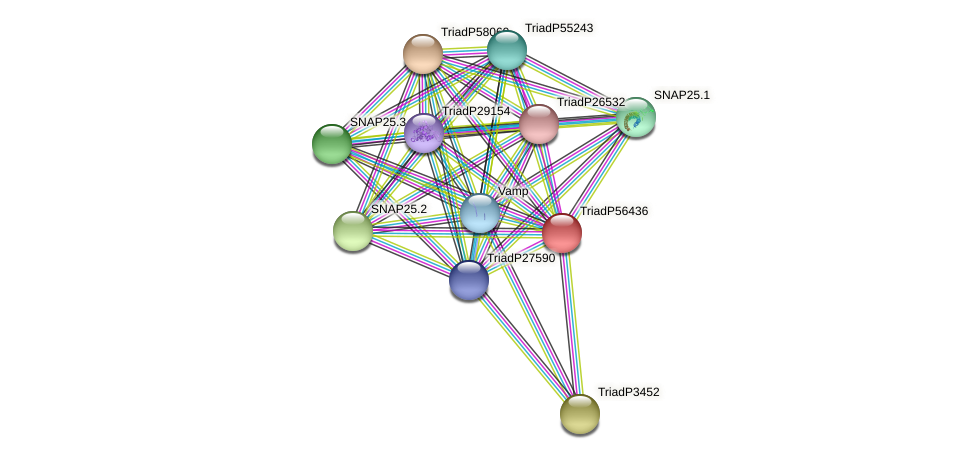 TriadP56436 protein (Trichoplax adhaerens) - STRING interaction network