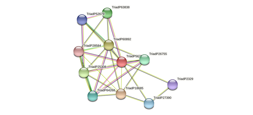 TriadP56767 protein (Trichoplax adhaerens) - STRING interaction network