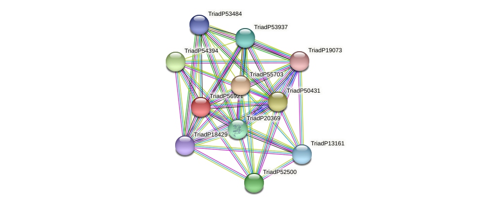 TriadP56921 protein (Trichoplax adhaerens) - STRING interaction network