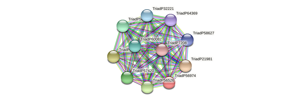 TriadP56974 protein (Trichoplax adhaerens) - STRING interaction network