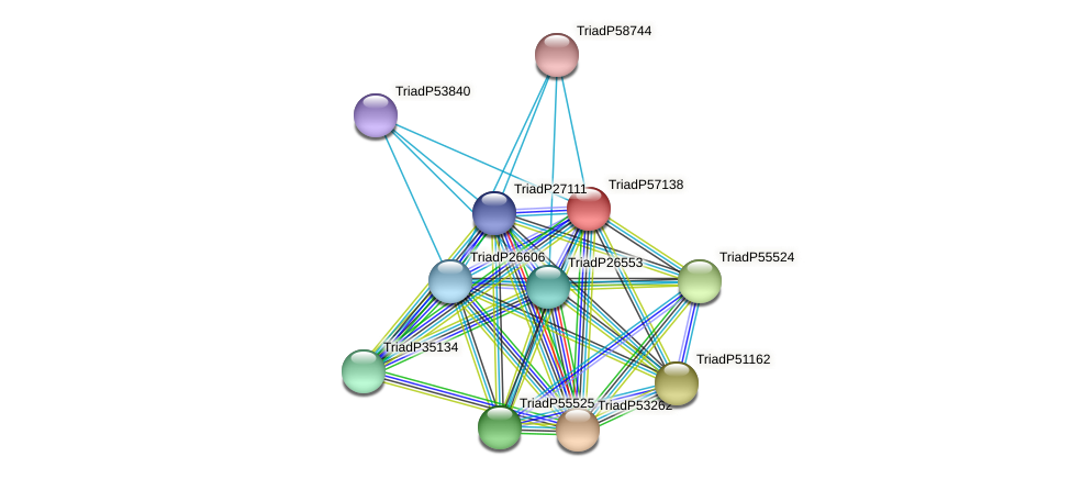 TriadP57138 protein (Trichoplax adhaerens) - STRING interaction network