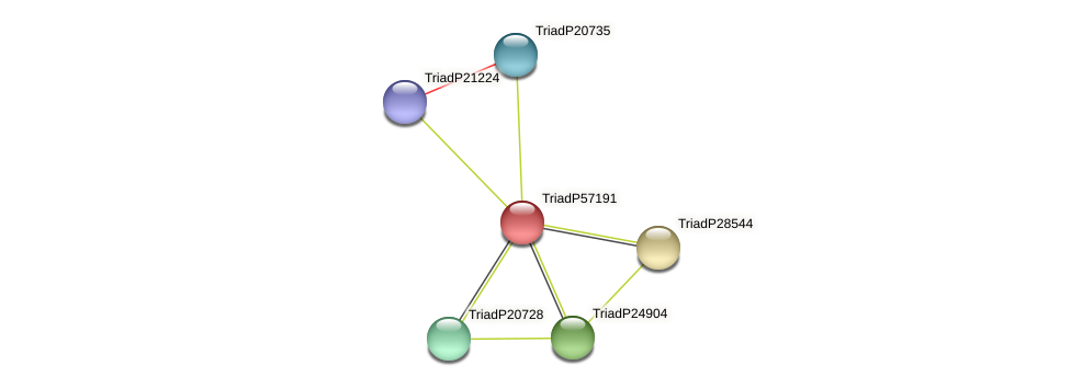 TriadP57191 protein (Trichoplax adhaerens) - STRING interaction network