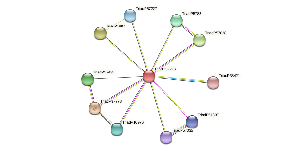 TriadP57226 protein (Trichoplax adhaerens) - STRING interaction network