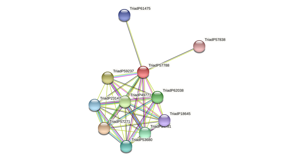 TriadP57788 protein (Trichoplax adhaerens) - STRING interaction network