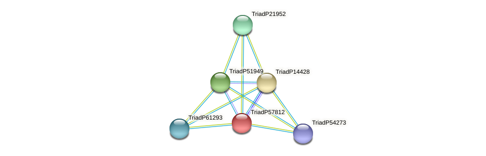TriadP57812 protein (Trichoplax adhaerens) - STRING interaction network