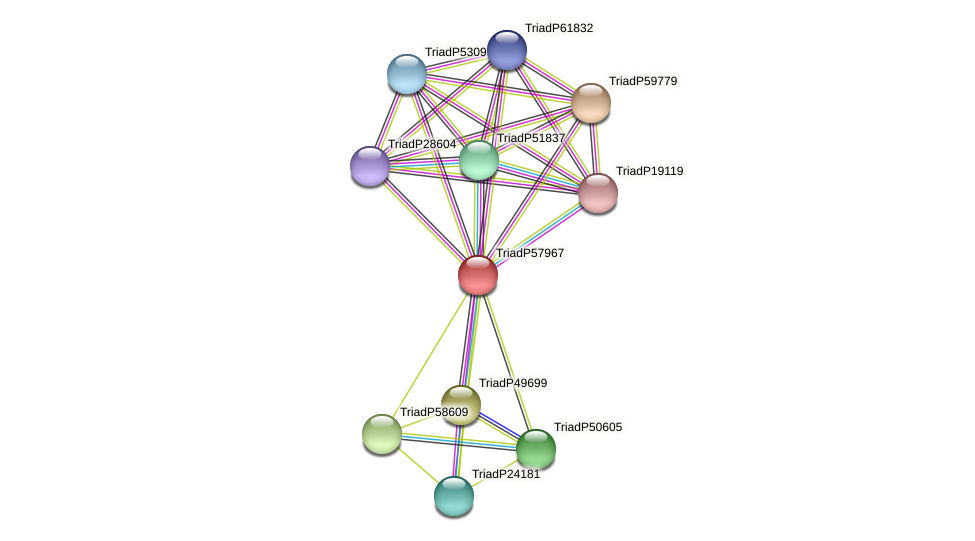 TriadP57967 protein (Trichoplax adhaerens) - STRING interaction network