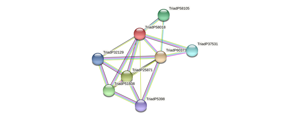 TriadP58018 protein (Trichoplax adhaerens) - STRING interaction network