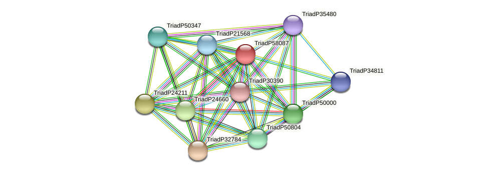 TriadP58087 protein (Trichoplax adhaerens) - STRING interaction network