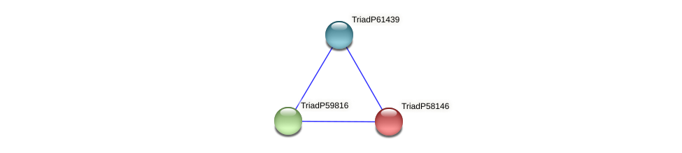 TriadP58146 protein (Trichoplax adhaerens) - STRING interaction network