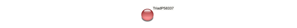 TriadP58337 protein (Trichoplax adhaerens) - STRING interaction network