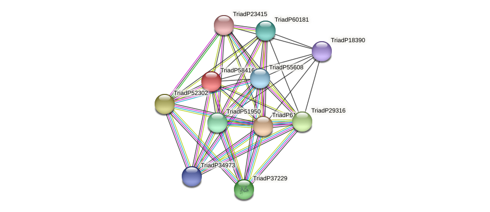 TriadP58416 protein (Trichoplax adhaerens) - STRING interaction network